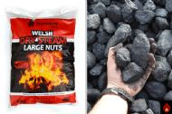 Welsh Dry Steam Large Nuts - 1/2 tonne